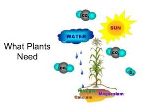 plants that need sunlight 04 what plants need