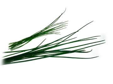 chives thinner and also thicker