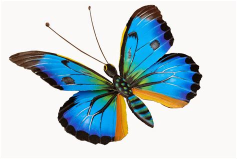 imagenes de mariposa ulises imageslist com images and photos with butterflies part 10
