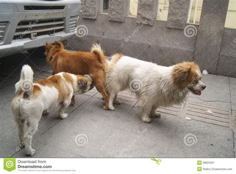 mating dogs dogs mating stock photo image 38823397