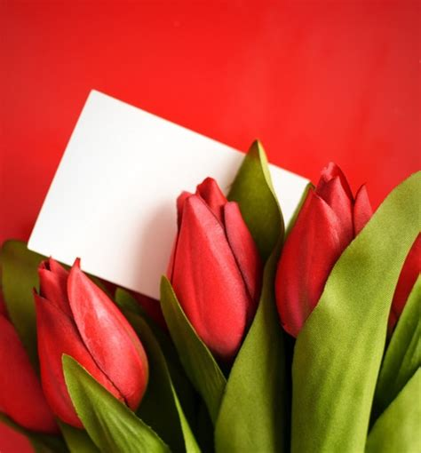 Sun City Florists Cards And Gifts - tulip flowers highdefinition picture 05 free stock photos in image format jpg size