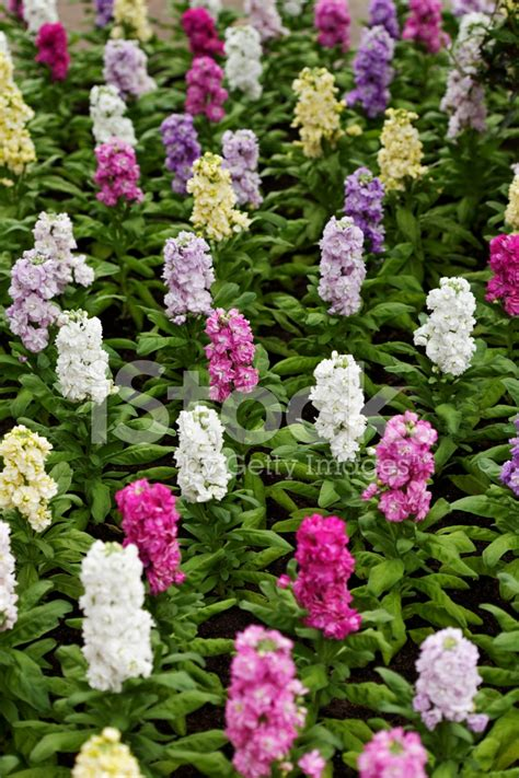 Bed Of Flowers by Bed Of Flowers Stock Photos Freeimages