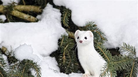 animals in the winter winter animal background animals wallpapers pinterest