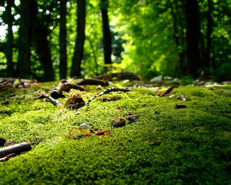 nature forest-landscape photo wallpapers Preview ... Japanese Wallpaper