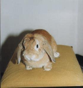 come si chiama la gabbia dei conigli tippete coniglio ariete chi 232 tippete