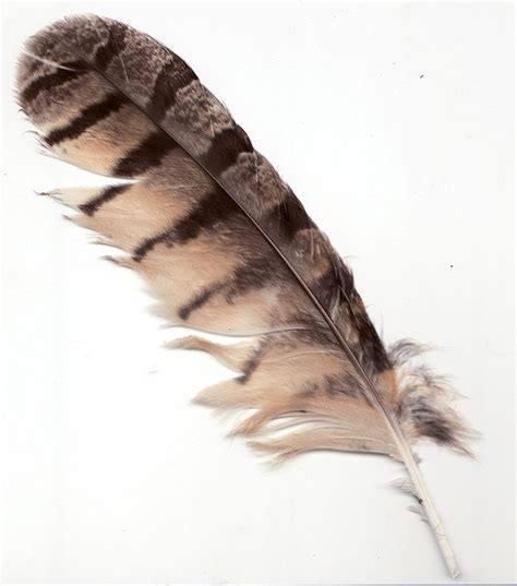 7 best images of owl printable feather template owl 25 best ideas about owl feather tattoos on pinterest
