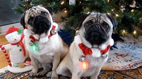 christmas  miami  holiday dining  guide miami food pug
