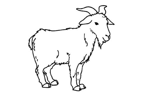 coloring pages mountain goat goat pictures for kids to color