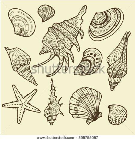 sea star tattoo designs best 25 conch shell tattoos ideas on sea
