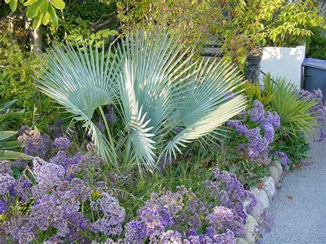 palma da giardino palme da giardino alberi latifolie tipi di palme da