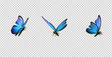 Design Your Home Realistic 3d Free by Flying Butterfly Blue Swallowtail By Videomagus Videohive