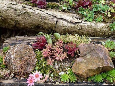 einen steingarten anlegen nachgeharkt