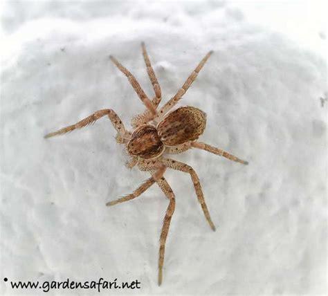 Garden Spider Spot Gardensafari Garden Spiders With Lots Of Pictures