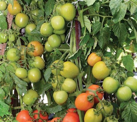Lmga Agro Jual Produk lmga agro jual produk pertanian harga murah dan