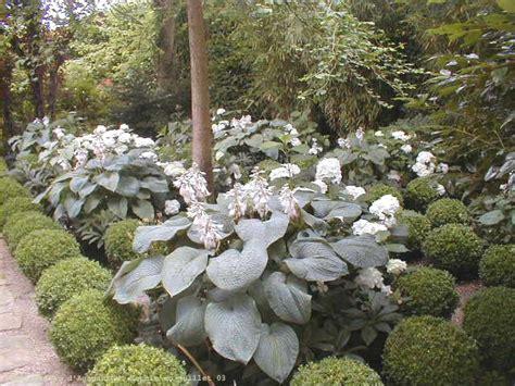 Incroyable Les Plantes De Jardin #5: allbuisa.jpg