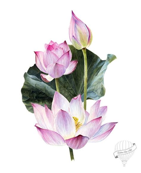 lotus flower painting designs 1000 ideas about lotus drawing on ganesha