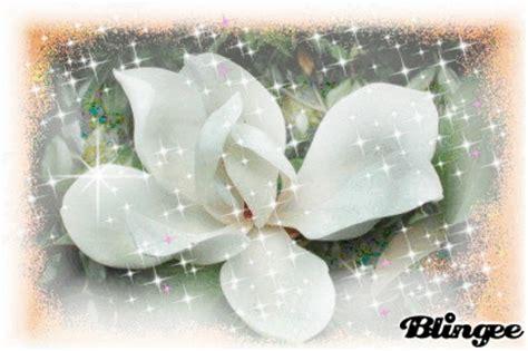 immagini magnolia fiore immagine fiore di magnolia 92929512 blingee