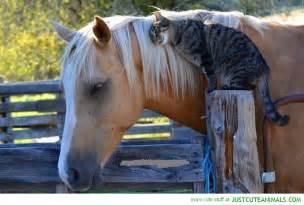 Puppy Barn Reviews Palomino Horse Cat