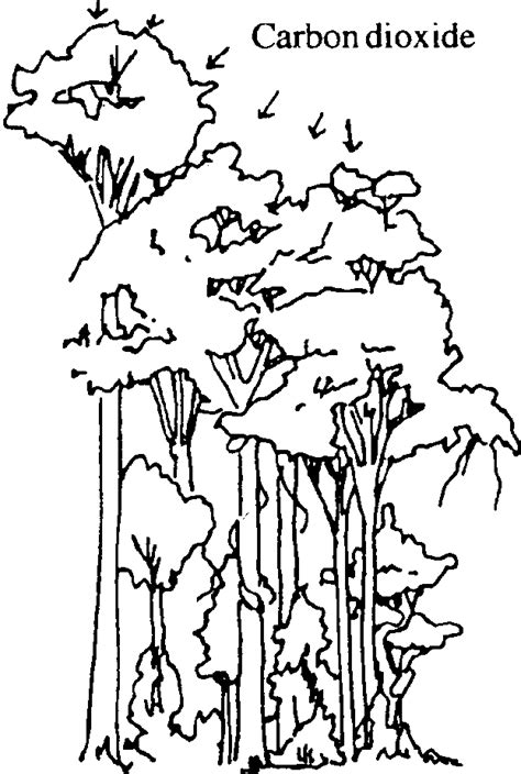 Photosynthesis Coloring Page Coloring Home Photosynthesis Coloring Pages