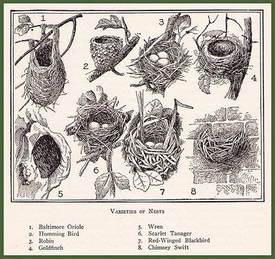 different types of bird nests for the birds pinterest
