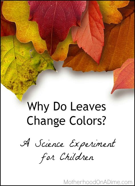 when do leaves change color why do leaves change colors a science experiment with