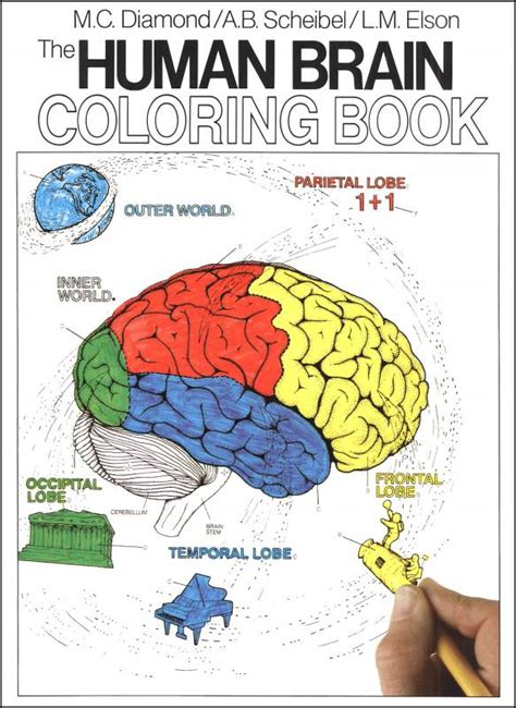 anatomy of the brain coloring book human anatomy coloring book