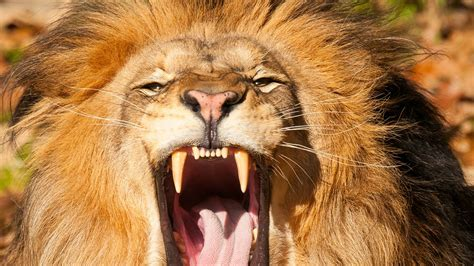 cute angry animal wallpapers