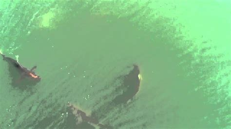 shark attack  myrtle beach  youtube