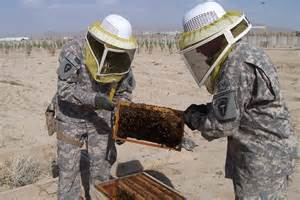 Bee Traning bee for adt iv adt iv