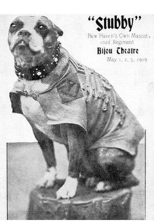 Sergeant Stubby Pictures Schools After The War