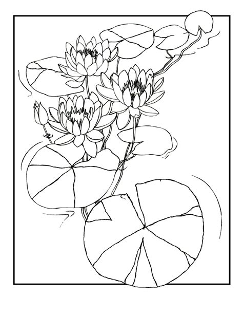 coloring page water lily free monet water lilies coloring pages