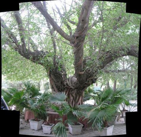 landmark trees of india