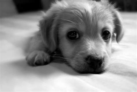 animal black and white cute dog puppy image 308734
