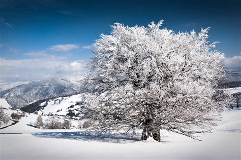 beautiful winter best nature wallpapers 10 beautiful winter wallpapers