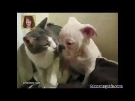 imagenes graciosas de cumpleaños de perros mascotas graciosas haciendo muchas tonterias animales