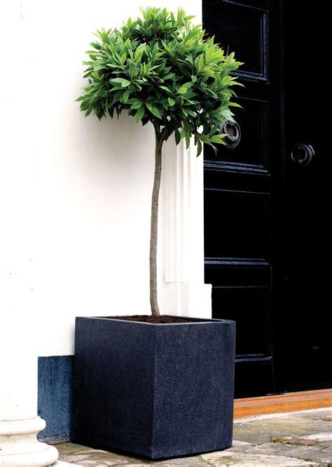 black planter cube garden planters in black fibreglass modern terrazzo