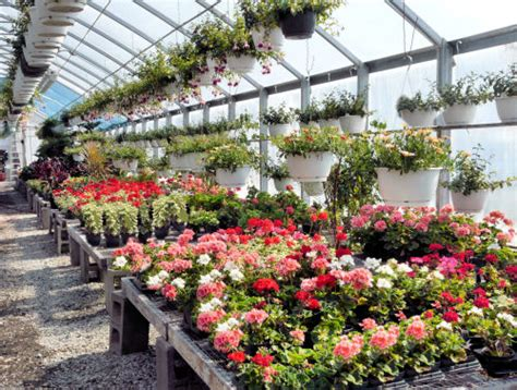 Fall Bedding Greenhouses