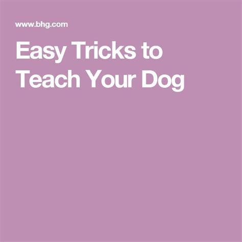 tricks to teach your puppy 1000 images about dogs on for dogs labradors and going