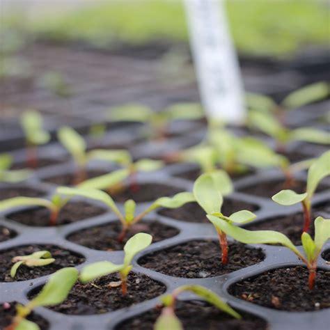 How Many Weeks In A Year where to buy vegetable seedlings online
