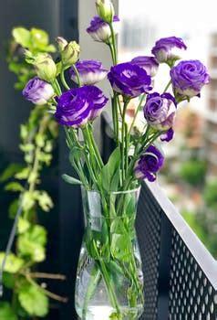 1000+ beautiful beautiful flowers photos · pexels · free