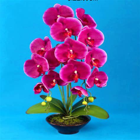 imagenes flores grandes imagenes de orquideas grandes