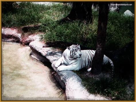 Imagenes En 3d De Animales Salvajes | ver imagenes de tigres salvajes imagenes de tigres