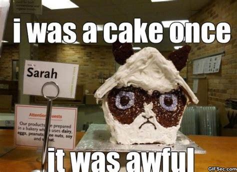 Birthday Cake Meme - birthday cake meme best collection of funny birthday