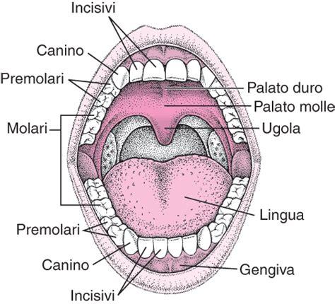 herpes all interno della bocca afte orali in sintesi risorse manuale msd versione