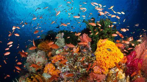 underwater hd wallpaper 1920x1080 underwater reef wallpaper hd www pixshark com images