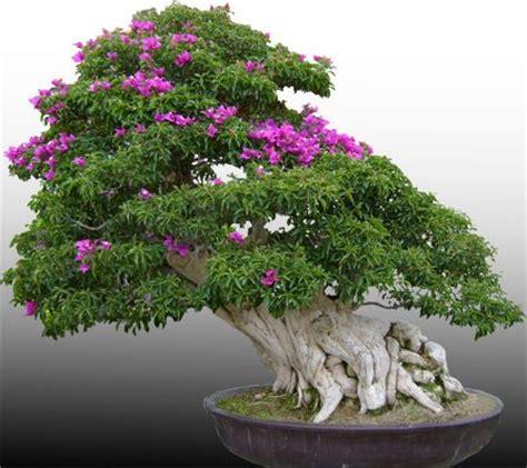 bonsai haus 243 besten bonsai bilder auf haus natur und