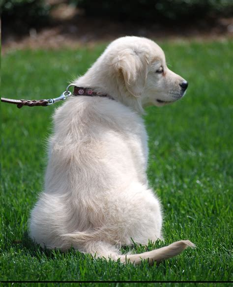 how many do puppies need in the year ideal weight