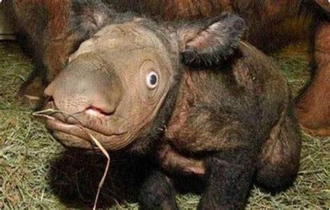 imagenes animales raros reales los 10 animales m 225 s raros del mundo y que no cre 237 as que