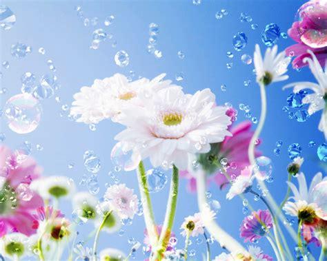 flower wallpaper online free games wallpapers latest flower wallpapers download