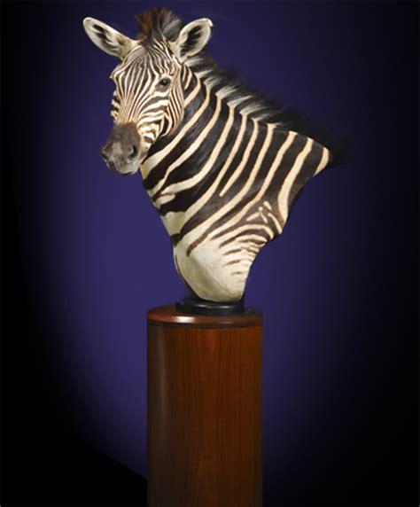 Kudu Pedestal Mount Monarch Taxidermy Inc